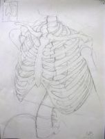 Skeleton Study- ribs by chai--tyto