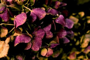 potpourri by photofreak07