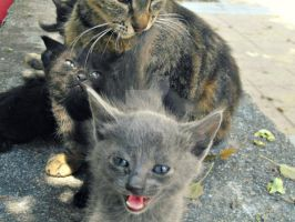Mama is mine. by Catist