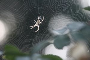 Orb weaver and web by KrazyKim