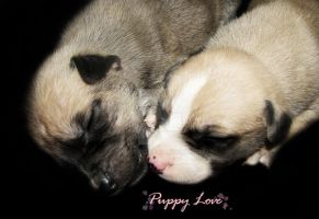 Puppy Love by SoliDeo