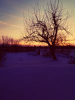 Sweet colours and lonely tree. by turboRabbit