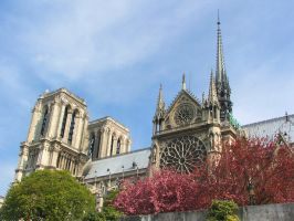 Notre Dame - Blossom by IrisAngel131
