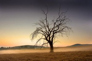 One old tree by carlosthe