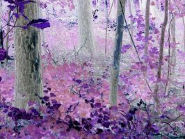 The Enchanted Forest 3 by ruyn