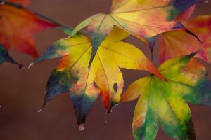 Autumn leaves 24 by TheEtherealSoul