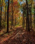 Forest Path 5 by aaron5153