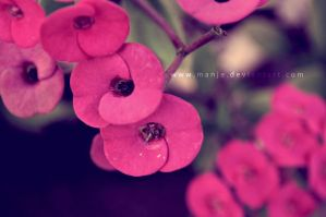 dotted with pink... by manje