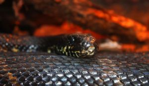 snake by lumiere81