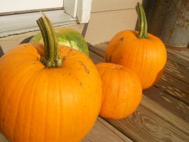 garden pumpkins by tylerp1991