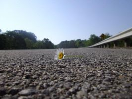 Flower on the Road by Wheriswaldo