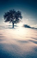 Noble Winter by Karisca