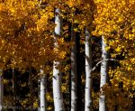 Aspens 4 by MartinGollery