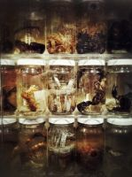 The Specimen Collection by littleredplanet