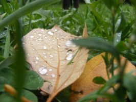 morning dew by poeticwriter007
