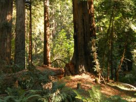 Muir Woods National Monument by dragondoodle
