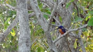 King Fisher by arluckman