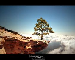 Solitary Tree v2.0 by xnoux