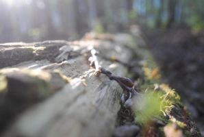 down the log by Shearkin