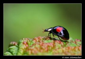 Ladybird - I by SmoothEyes