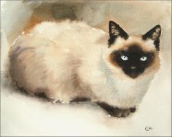 Siamese Cat by cmwatercolors