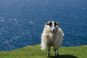 Portrait of a sheep II by Blackpassion777