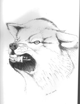 wolf snarl sketch by FATRATKING