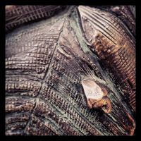 face on turtle's back by logopics