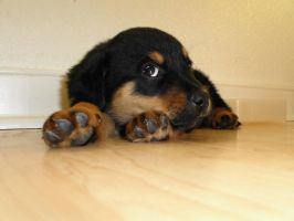 Puppy Pic 2 by Nianya