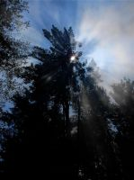 Light Through the Smoke and Trees by AG88