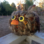 Owl Pumpkin by TornFeathers