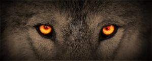 Orange Wolf Eyes by 8TwilightAngel8