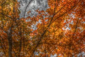 Fall HDR 1 by flowofwoe
