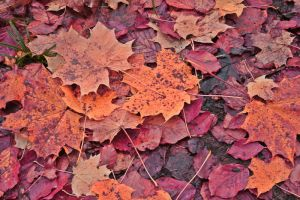 Autumn Leaves by CD-STOCK