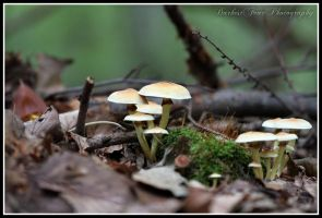 Mushroom Spotting 009 by DarkestFear