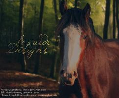 Clydesdale Horse Picture by EquideDesigns