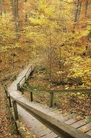 stairs of fall by deepestwonder