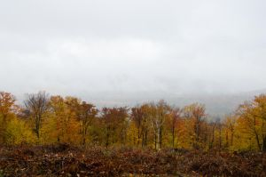 White Mountains  Fall Foliage  186 by FairieGoodMother