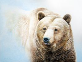 Grizzly in Mist by Misted-Dream