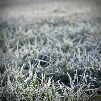 frost by vouloir