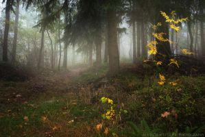 Into Autumn by MarcoHeisler