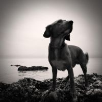 Dog and sea ...II by denis2