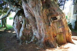 Yew Tree Door 5 - Stock by OghamMoon