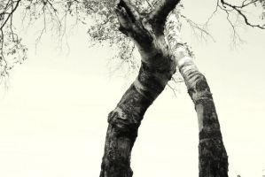 love of two trees by sunnast