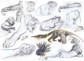 Zoo Trip: August 2010 by 89ravenclaw
