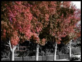 Red and Purple Trees by Athdil