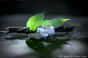 Natural Composition n_1 by Frozen-Grave
