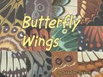 Butterfly Wing Textures II by Shadoweddancer