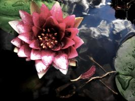 Water Lily II by TheMello