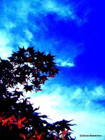 Japanese Maple by corazongirl